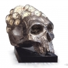 STRESS. Silvered bronze Skull with mixture of manometers and faucets of depression. The original is a Steel one, and it is the property of M.Gérard Depardieu.  Bronze H 50 X 40 X 50 cm